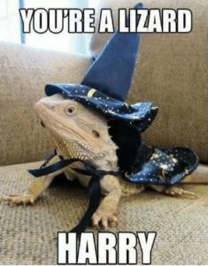 youre-a-lizard-harry-36247804